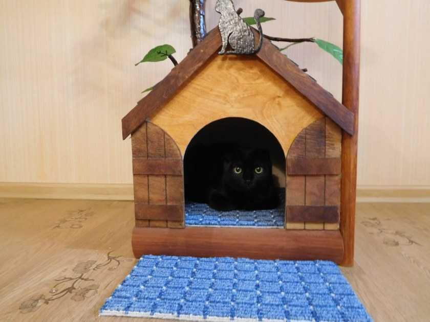 Домик для кошки своими руками — варианты постройки уютных и практичных кошачьих домиков