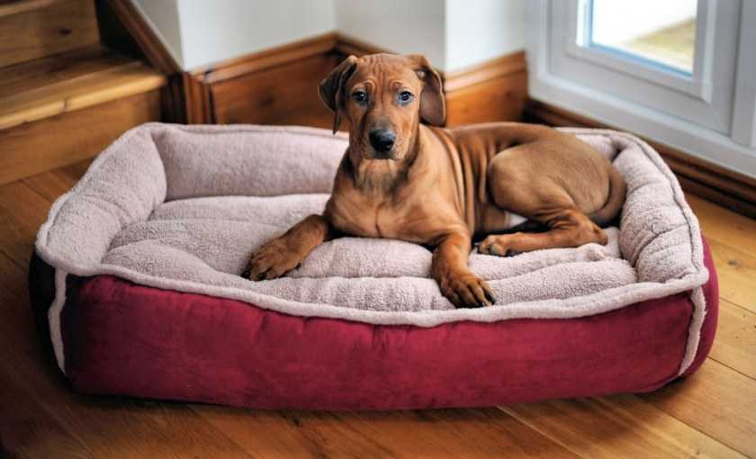 Лежанка для собаки своими руками — пошаговая инструкция по созданию, выкройки и чертежи, выбор материалов и типа лежанки (фото + видео)